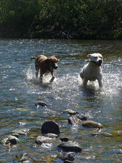 Free summer sun water dogs joy
