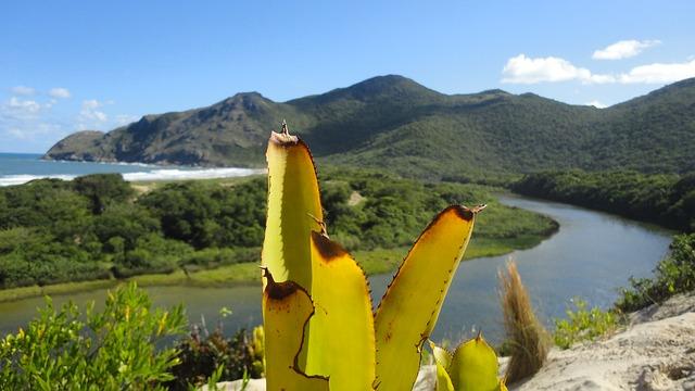 Free mountain green rio serra mountains nature shrubs