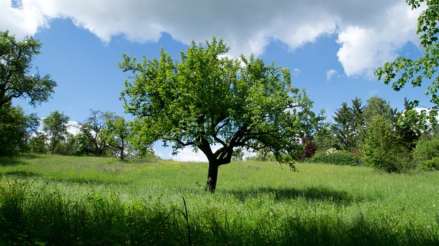 Free tree nature landscape meadow relaxation green