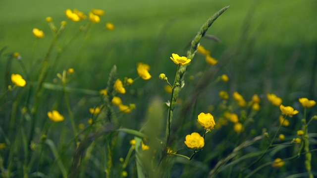 Free flowers flower plant nature green