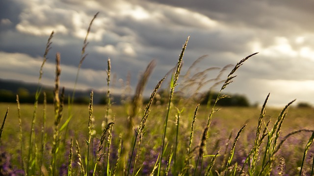 Free meadow landscape spring plant grass idyll clouds