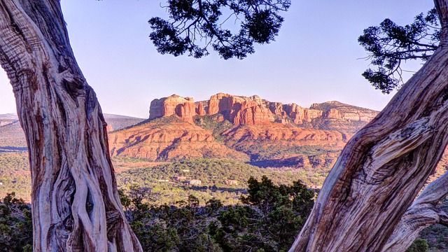 Free sedona arizona red rocks tree