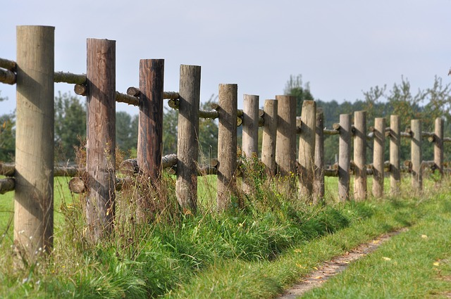 Free lane summer fence nature landscape migratory path