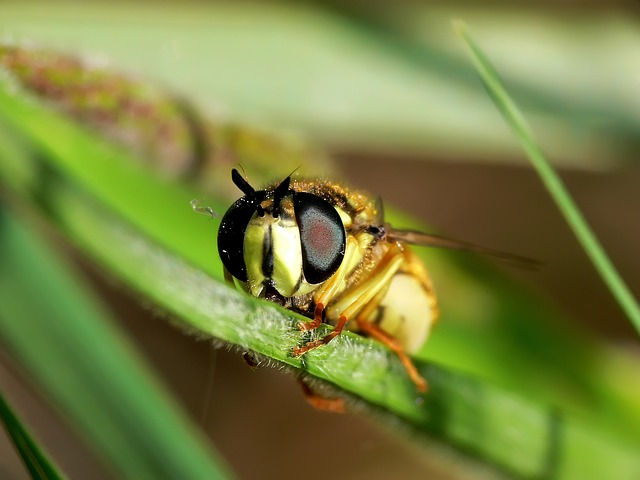 Free wasp insect close