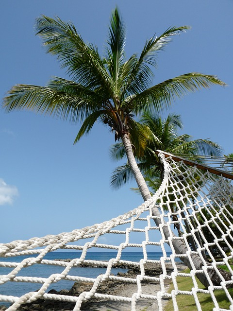 Free hammock palm tree perspective coconut tree beach