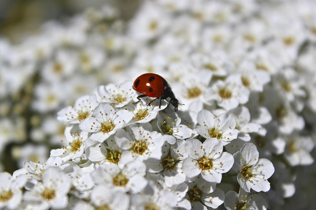 Free summer flowers shrub white ladybug insect