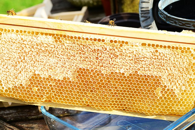 Free Photos: Bees on frame honey honey bees honeycomb | PollyDot