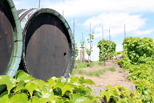 Free wine barrel barrel wine vineyard sky vine nature