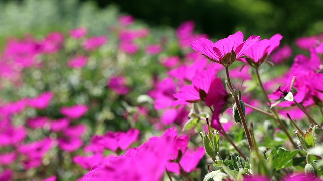 Free flowers colorful pink spring flower summer nature