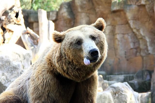 Free bear language animal funny captivity