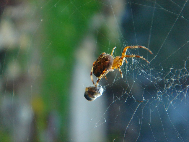 Free spider insects a spider's web food detail