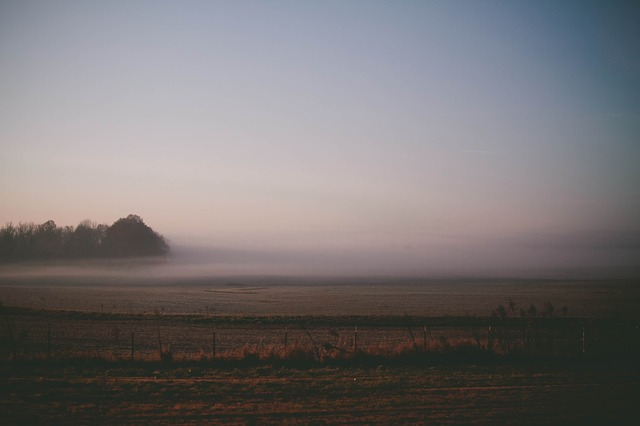 Free Photos: Haze descending fog misty fog nature early morning | Unsplash