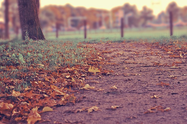 Free autumn footpath walkway foliage fall leaves