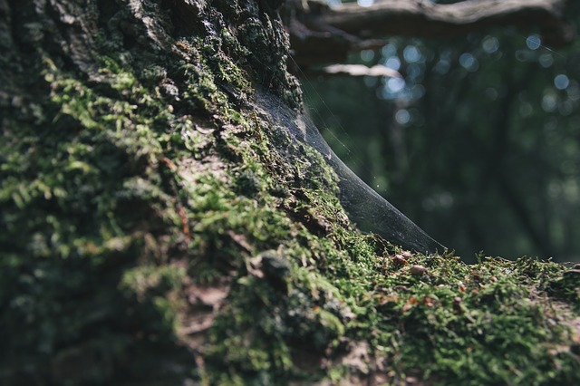 Free tree bark forest bark wood rough nature moss old