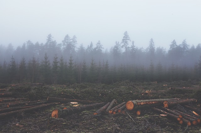Free deforestation deforest lumber untimber logs