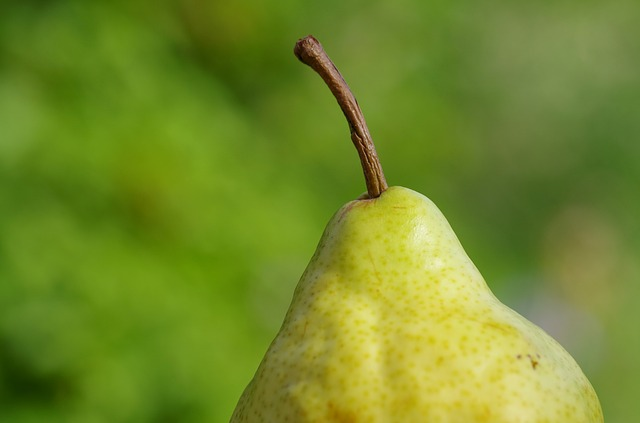 Free pear fruit fruits yellow nature vitamins frisch