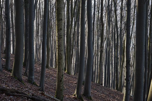 Free beech wood strains beech logs close close book
