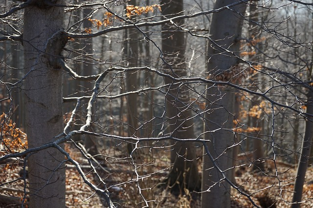 Free branches forest aesthetic beech wood beech trees