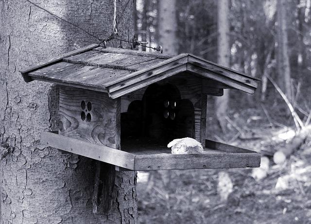 Free bird aviary birds feed feeding place nature pets