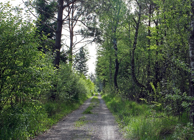 Free forest path lane forest trees away gün