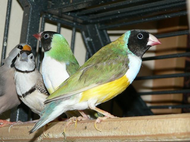 Free bird gouldian animal