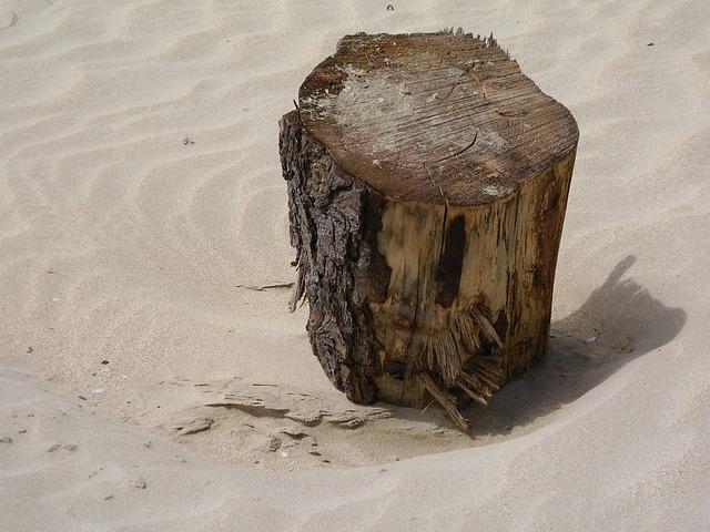 Free flotsam jetsam beach sand drift wood texture wind