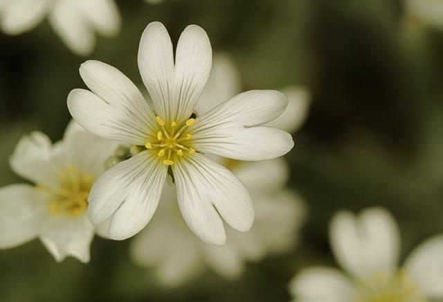 Free flower flowers plant white green white green