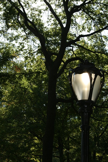 Free street lamp lamp tree trees nature central park