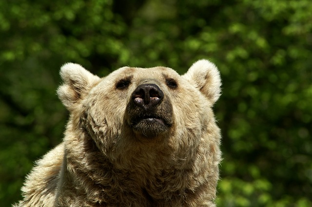 Free brown bear bear fluffy wildlife park cozy nature