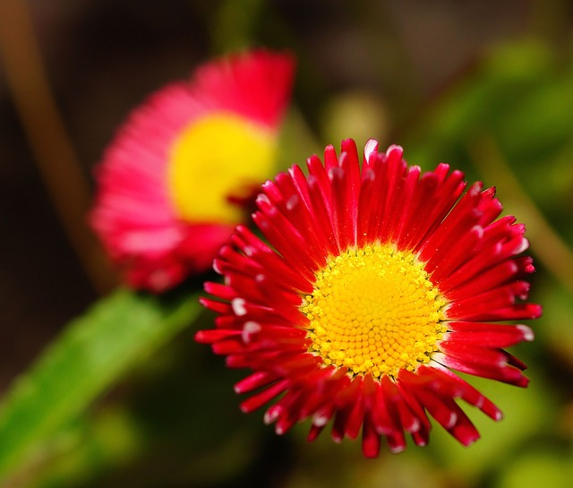 Free flower red yellow colorful sweet