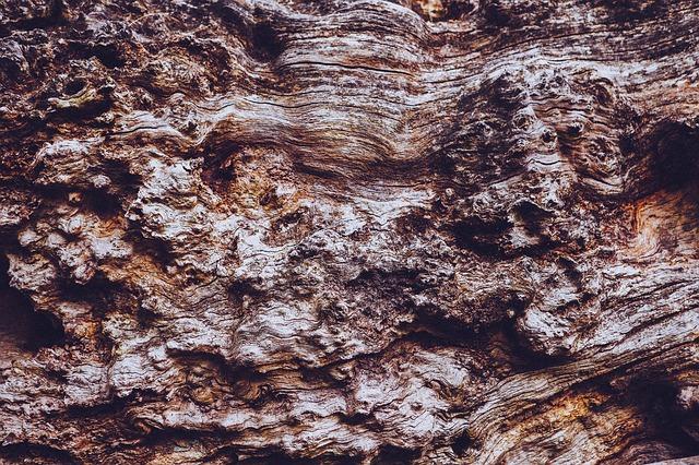 Free bark tree wood trunk