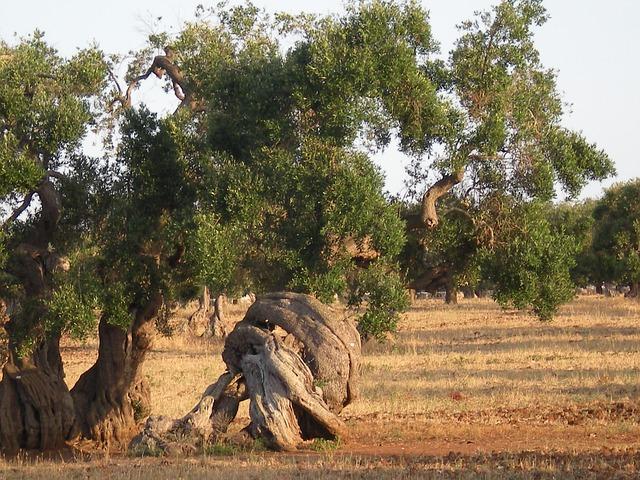 Free olive tree trees secular