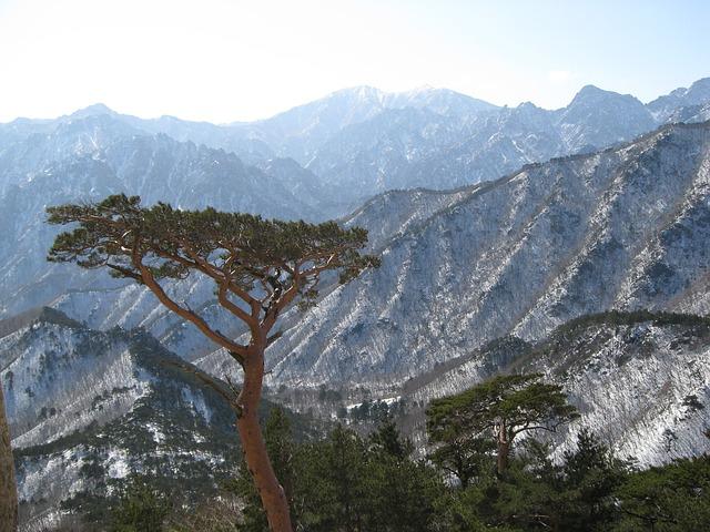 Free mt seoraksan ulsan rock pine
