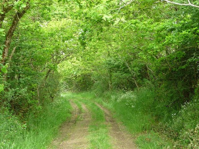 Free trail campaign vendéenne landscape nature
