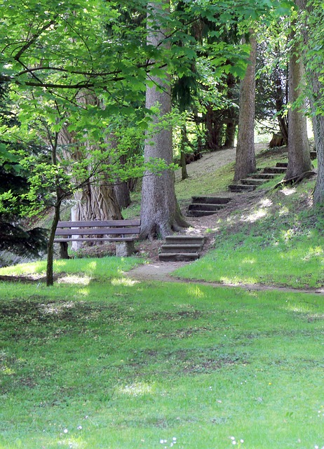 Free bank bench stairs gradually forest nature