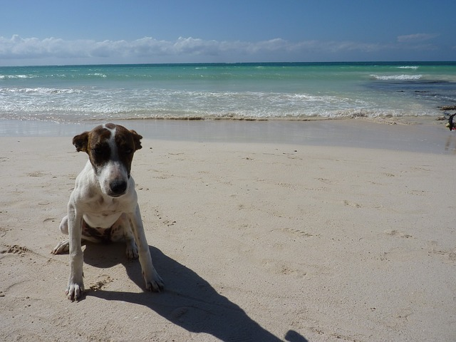 Free jamaica dog beach