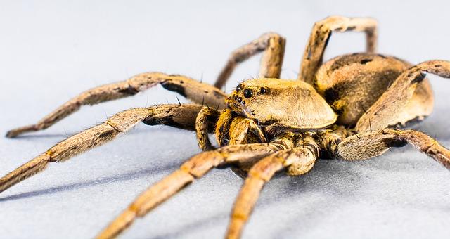 Free spider arachnid insect close