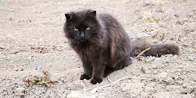 Free cat black country lumps field strawberry
