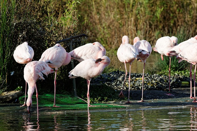 Free flamingos pink water reed enclosure animal zoo