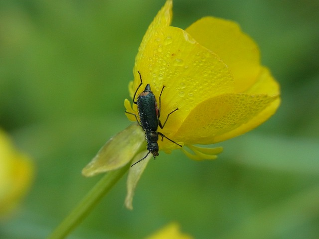 Free animal insect beetle nature macro close