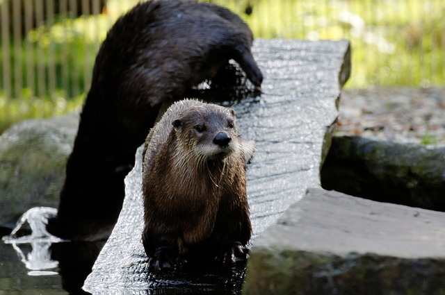 Free otter board water enclosure animal zoo