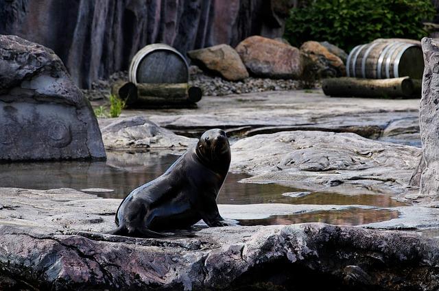 Free sea lion animal rock enclosure zoo