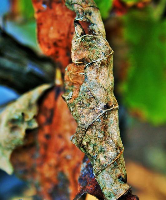 Free brown leaf leaf brown dry decaying curled veined