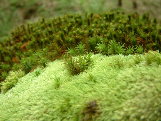 Free moss green plant vegetation forest floor nature
