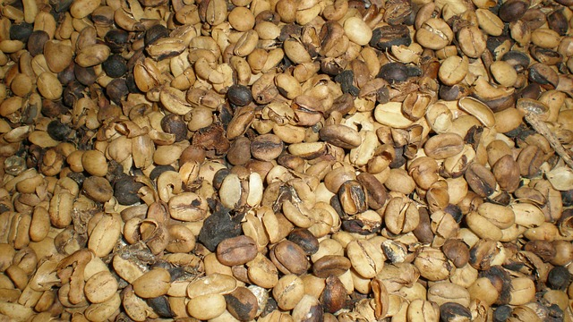 Free coffee beans coffee roasted seeds beans food
