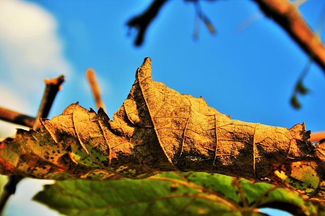 Free brown leaf leaf brown dry decaying veined curled