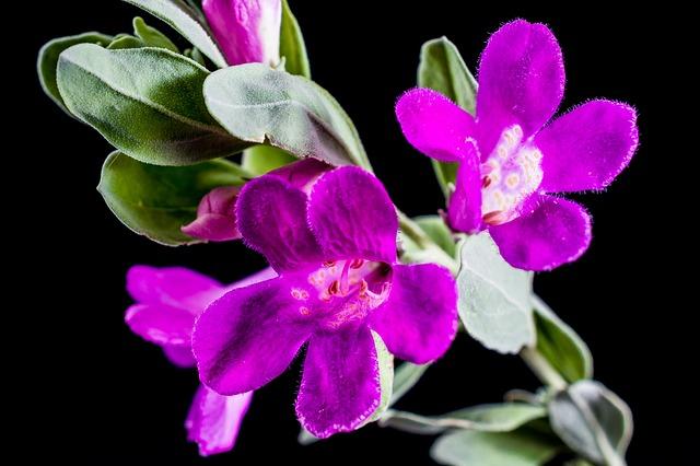 Free Photos: Wild flower flower purple | Josch13