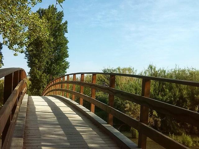 Free bridge tree road entrepreneurship landscape nature