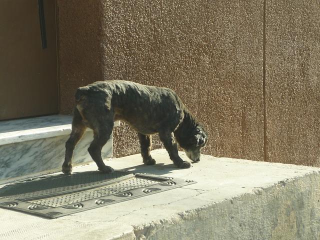 Free dog guardian door domestic pet friend socket