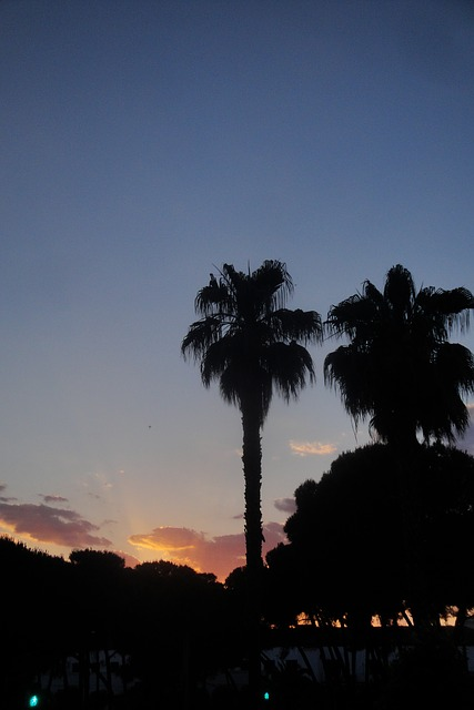 Free palms trees pine sunset dusk sky backlight